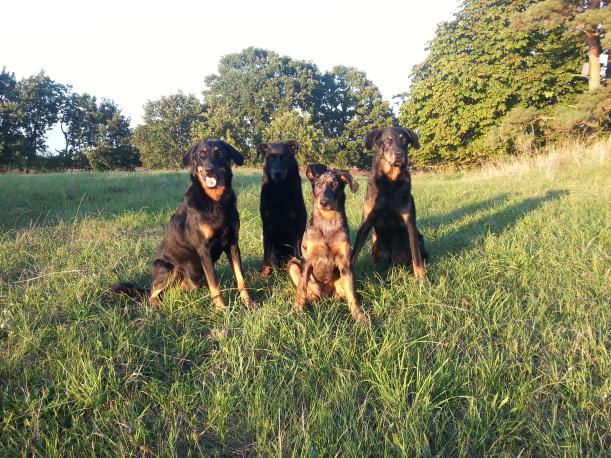 Fyra av våra hundar
