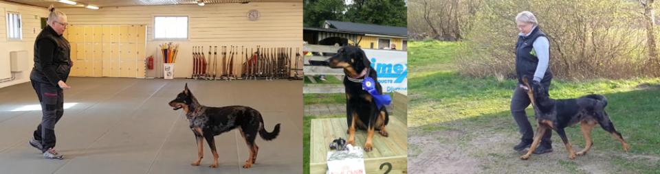 Headergrundertavlingshunden-mindre